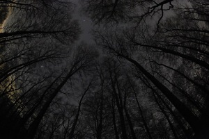 http://www.allthesky.com/nightscapes/forest2.html
